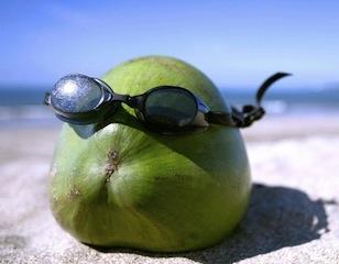 funny coconut