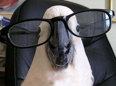 parrot with glasses.jpg