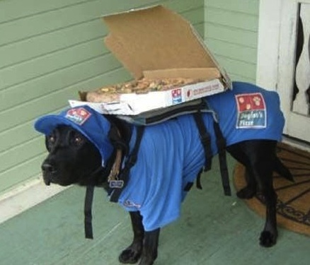 pizza delivery dog.jpg
