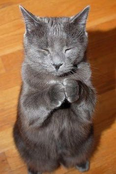 praying cat