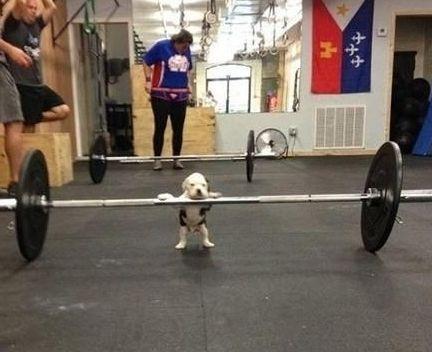 puppy too weak