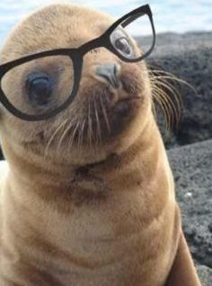 seal with glasses