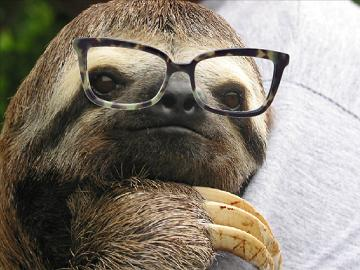 sloth with glasses