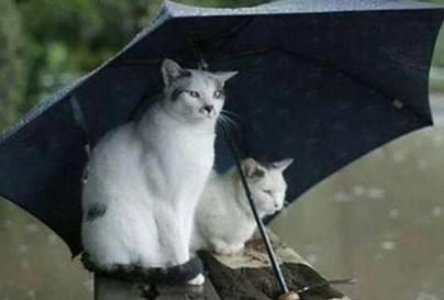 cats under umbrella