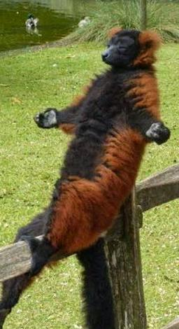 cute animal meditating - 1.jpg