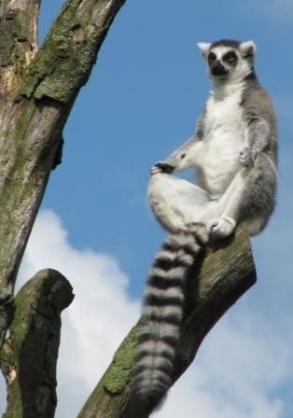 cute animal meditating - 2