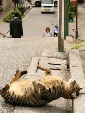 cute cat meditating