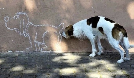dog on the wall.jpg