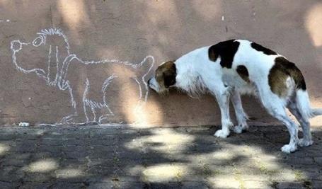 dog on the wall.jpg