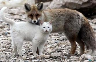 fox and kitty