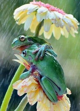 frogs under flower umbrella.jpg