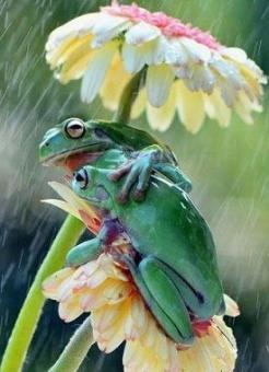 frogs under flower umbrella.jpg