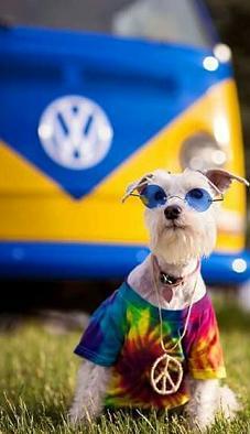 peace dog