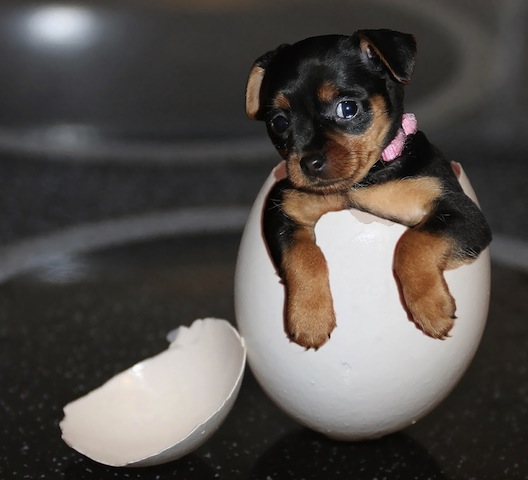 puppy in an egg.jpg