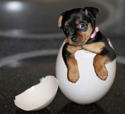 puppy in an egg.jpg