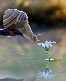snail smelling flower