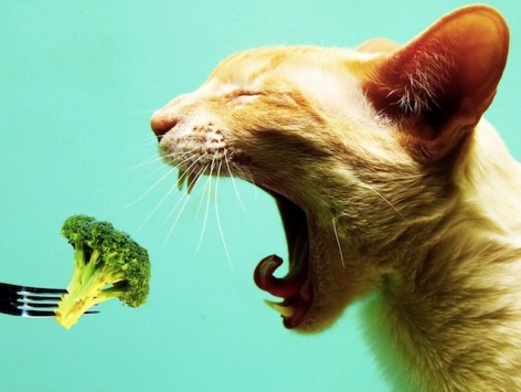 cat eating broccoli.jpg