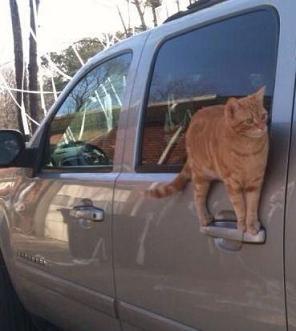 cut cat balancing