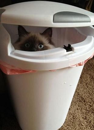 cute cat in bin