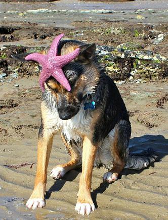 cute dog with startfish
