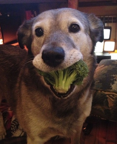 cute dog_broccoli.jpg