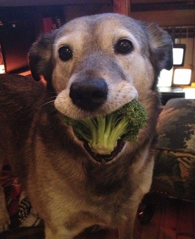 cute dog_broccoli.jpg