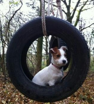 cute doggie in a tyre