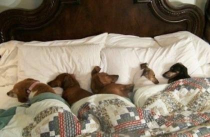 cute doggies sleeping