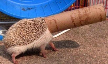 funny animal 'youtube'