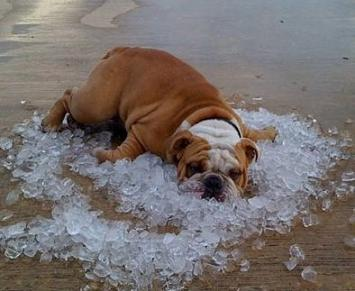 funny dog on ice