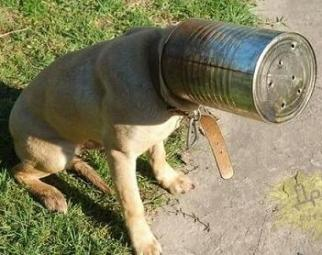 funny dog stuck in a can