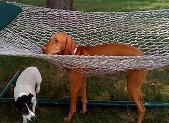 funny dog stuck in net.jpg