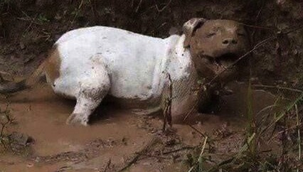 happy muddy dog