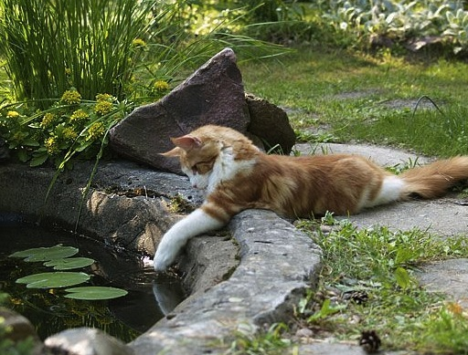 cat playing with fish.jpg
