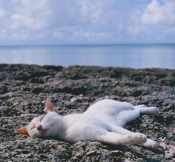 cat relaxing at the beachj