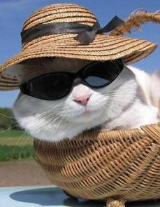 cool cat in sunglasses