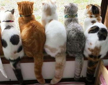 cute cats group photo.jpg
