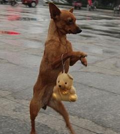 cute dog walking upright