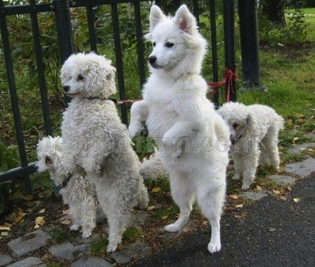 dogs walking.jpg