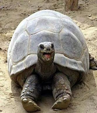 smiling tortoise
