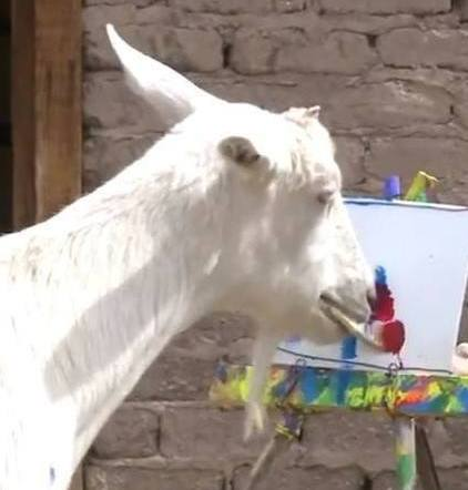 talented goat