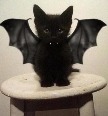 cat in bat costume