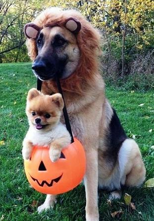 Cute-Halloween-dogs