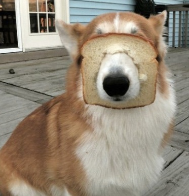 doggie loves bread