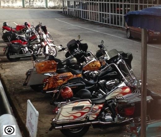 harley davidson bikes.jpg