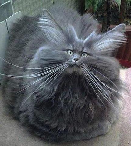 fluffy cat-4.jpg