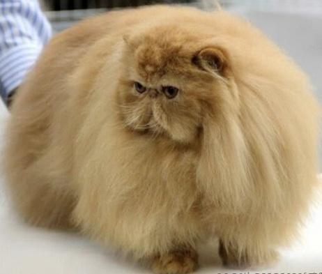 fluffy cat-5
