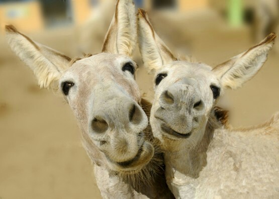 happy donkeys