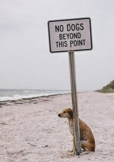 no dogs beyond this