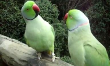 bird conversation.jpg